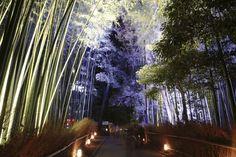 全部知ってる?米国CNNが選んだ『日本の最も美しい場所』31選 | RETRIP[リトリップ] Waterfall, Plants, Outdoor, Outdoors, Waterfalls, Plant, Outdoor Games, The Great Outdoors, Planets