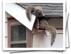 The Guardian, #1 Squirrel Repeller, Squirrel Repellent, Squirrel Control