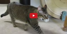 This is a must see for anyone that has lazy, indoor cats !!