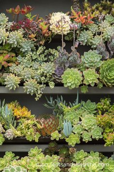 The Succulent Cafe - Succulents and Sunshine