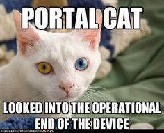 Portal cat! | We'll Call You Chell