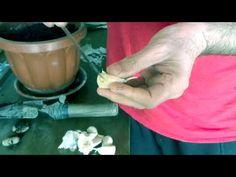 Karcsúsító derék vick vaporub-tal - Tippek a derék karcsúsághoz