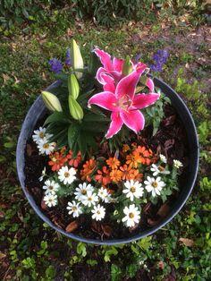 Bucket plants