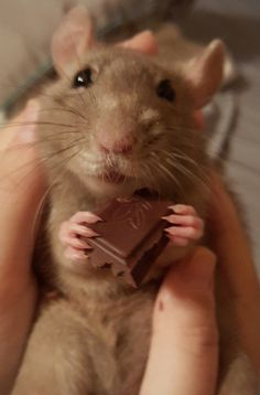 A mouse after my own heart or is it a ratty?