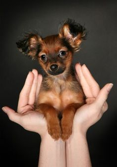 not sure what breed this is, but it's adorable!