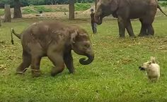 Daily Cute: Baby Elephant And Dog Play Tag | Care2 Healthy Living