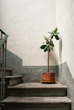 Staircase & potted plant in Roma -photograph by Helena La Petite From HouseofThoL.blogspot