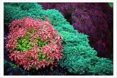 Garden Abstract | Flickr - Photo Sharing!
