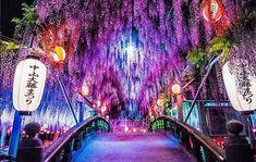 「江戸時代にタイムスリップしたみたい」 福岡県の神社の藤が神秘的 – grape [グレイプ] Beautiful Places In Japan, Beautiful Places To Visit, Travel Pictures, Travel Photos, Go To Japan, Aesthetic Japan, Japan Travel, Time Travel, Travel Photography