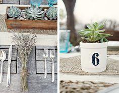 succulent #succulent #plant