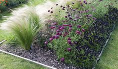 The Best Ornamental Grasses for Your Yard: Mexican Feather Grass Stipa tenuissima and 'Chet Noir' scabiosa Landscaping With Fountains, Backyard Pool Landscaping, Landscaping Plants, Landscaping Ideas, Inexpensive Landscaping, Landscaping Company, Modern Landscaping, Garden Shrubs, Diy Garden