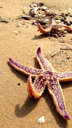 find a Real Starfish