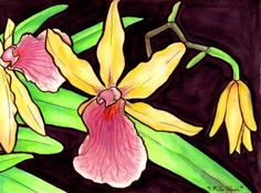 Watercolor illustration of Hawaiian Orchids.