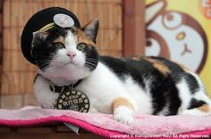 Station Master Tama, Rescue Cat that Saved a Train Station, Turns 16 Today! Wakayama, I Love Cats, Cool Cats, Soft Kitty Warm Kitty, Happy 16th Birthday, Cat Run, Pet Monkey, Cat Costumes, Beautiful Creatures
