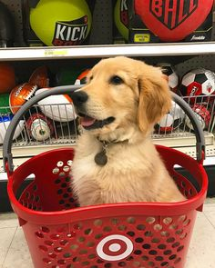 Can I get one just like this at my Target store?? 😍