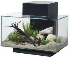 Fluval Edge Aquarium 23 Litre Gloss Black Fish Tank - Pleasepleaseplease!!!!