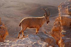 Deserto de Negev - Mitzpe Ramon, Israel   por yeowatzup