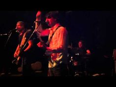 The Fuzzy Bees Bees, Live, Videos