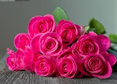 roses Roses, Flowers, Plants, Pink, Rose, Flora, Royal Icing Flowers, Floral, Plant