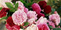 10 Things to Do With a Bucket of Flowers - GoodHousekeeping.com