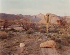 Cactus, Tucson, Arizona, April 1979 — Joel Sternfeld