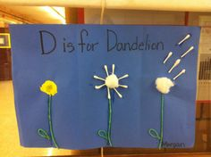 D is for dandelion. Seed cycle/plants preschool