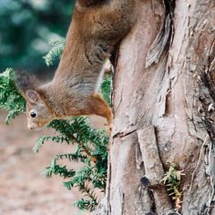 #mammal #wildlife #nature #tree #noperson #wood #wild #animal #outdoors #fur #rodent #squirrel #cute #park #portrait #bark #environment #tail #cat #panasonic #panasonicfr #lumix #lumixfr