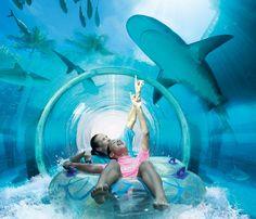 Da un Salto de Fe hacia un lago de tiburones