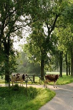 apparently picture taken in The#Netherlands ~ love it<3