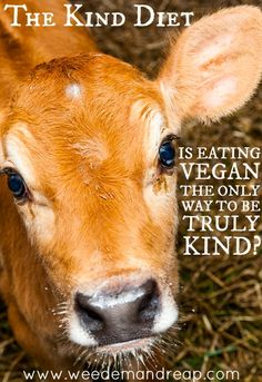 The Kind Diet: Is eating VEGAN the only way to be truly kind? #farming #animals #veganism