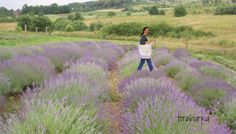 magic bag of Provence with lavende Artist Bag, Magic Bag, Provence, Country Roads, Bags, Handbags, Taschen, Purse, Purses