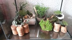 Planten en kurk