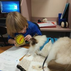 No One Can Believe How Good This Therapy Cat Is At His Job