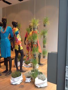 vendono piante o vestiti?