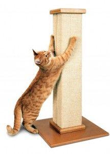 Rascadores para gatos, son necesarios