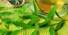 Lemon verbena is popular for its light citrus taste and smell, but it's also full of antioxidants. Learn how it works & the best ways to use it. Lemon Health Benefits, Healing Oils, Verbena, Potpourri, Health Remedies, Plant Leaves, Health Fitness, Herbs, Nature