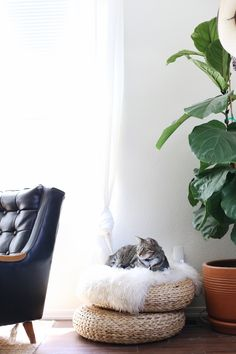 Chelsea Bird -- At home with our kitty, Boots!