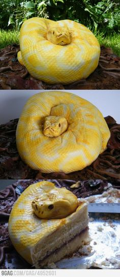 A snake cake...  That's just wrong!!! So scary!!!