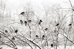 winter birds by jen huang