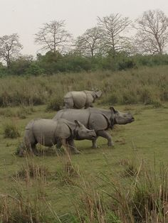 In the heart of Assam, this park is one of the last areas in eastern India undisturbed by a human presence. It is inhabited by the world's largest population of one-horned rhinoceroses, as well as many mammals, including tigers, elephants, panthers and bears, and thousands of birds.