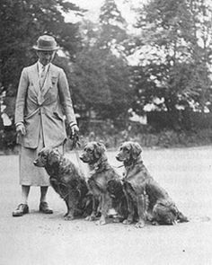 1930′s model golden retrievers - Winifred Charlesworth with some of her Noranby goldens.
