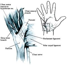 ulnar canal - Google Search