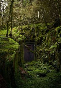 magical secret door in the forest wald, Abandoned Buildings, Abandoned Places, Nature Aesthetic, Aesthetic Dark, Fantasy Landscape, Urban Landscape, Landscape Art, Landscape Sketch, House Landscape