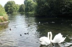 St. James's Park, Londres (Reino Unido) - Foto: Ticiana Giehl e Marquinhos Pereira/Desempacotados