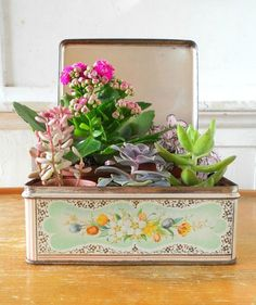 Love the idea of planting small plants in a tin. Would make a great planter for small herbs.