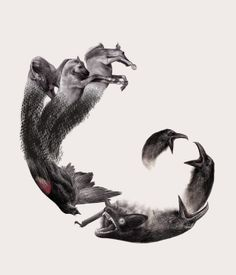 στου Πικραμένου την Αυλή Circles of Life by Nikos Tsounakas, via Behance #drawing #painting #animals