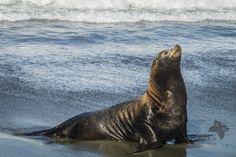 """""""Tomando el sol"""" by Verónica Morales on 500px - Sea Lion, Baja California, Mexico."""