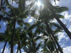 Hawaiian Beauty IV