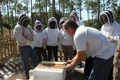 Keeping honey bees isn't hard, but it does require some preparation and special equipment.