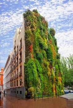 Jardín Vertical de Caixa Forum, Madrid (España) obra del botánico francés Patrick Blanc. Superficie: 460 m.cuadrados, con 15.000 plantas de 250 especies diferentes: las plantas no necesitan tierra, sólo agua, minerales, luz y dióxido de carbono.